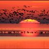 Sevda Kuşun Kanadında (Cem Karaca)