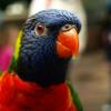 Critics of hand feeding birds say it hinders conservation