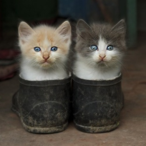 Puss in Boots (first draft)