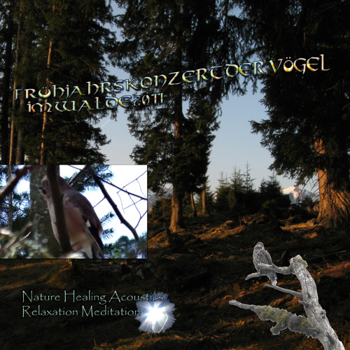 Frühjahrskonzert Vögel Wald 1 Naturgeräusche Nature Sounds Meditation Relaxation healing