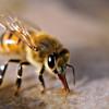 """Truckin' Bees"""