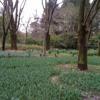 R.O.M - The Garden (Chino Yoshio Piano Version)