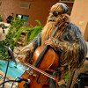 Wookiee Cellist performing