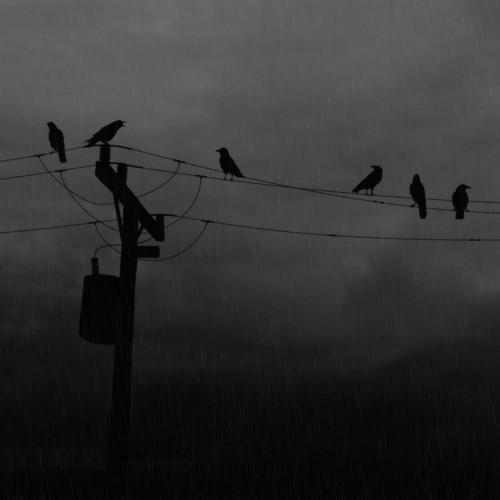When Ravens Call