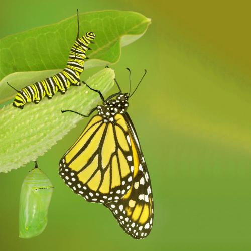 La Comptine De La Chenille Et Du Papillon