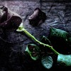 Funeral Of Love (Lyrics)