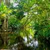 Download Jim Stubblefield - La Selva Negra Mp3