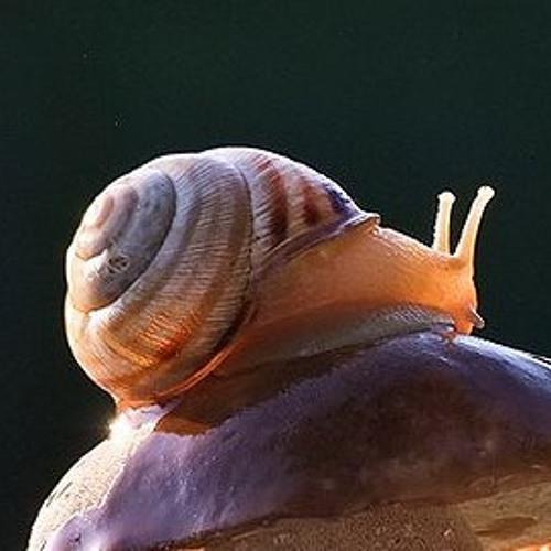 I Saved The Snails