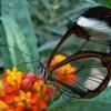 Butterfly (Herbie Hancock)