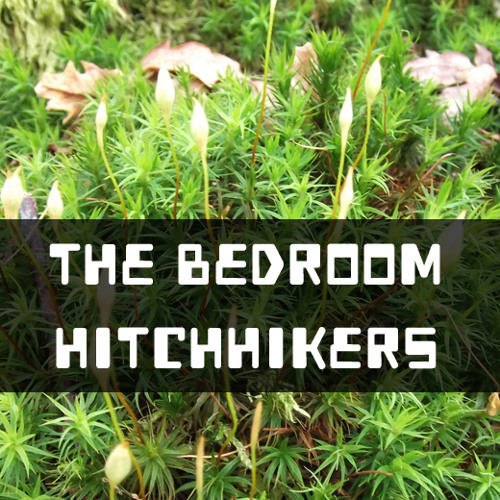 The Bedroom Hitchhikers - The Red Bright Cherry