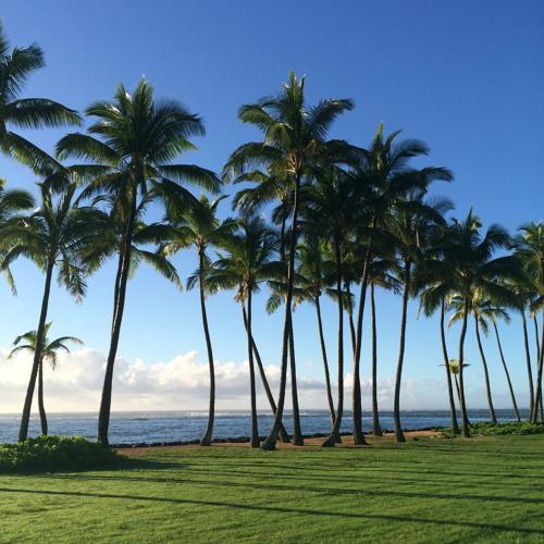 Hawai'i: The Legacy of Sugar