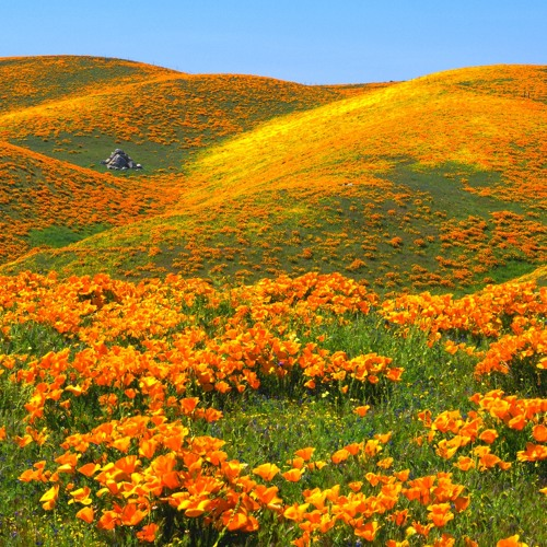 Memosponga - High On Hills
