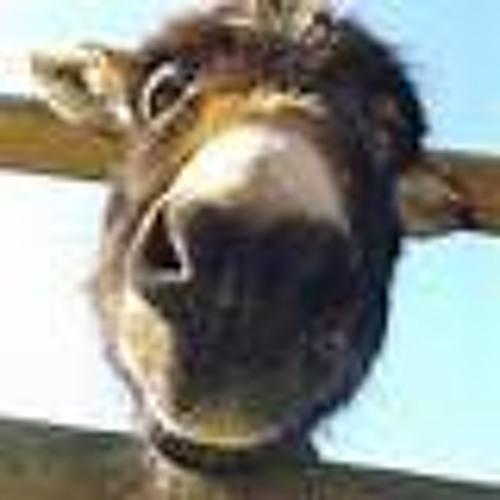 One baby donkey minute