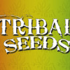 Tribal Seeds Dark Angel