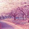 Boku no Sakura