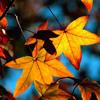 Autumn Leaves - Ed Sheeran (Cover)