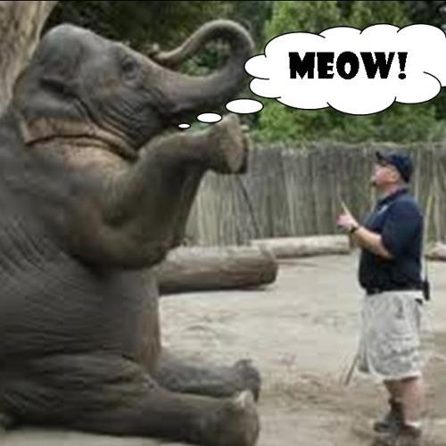 Crazy - Crazy Zoo Story