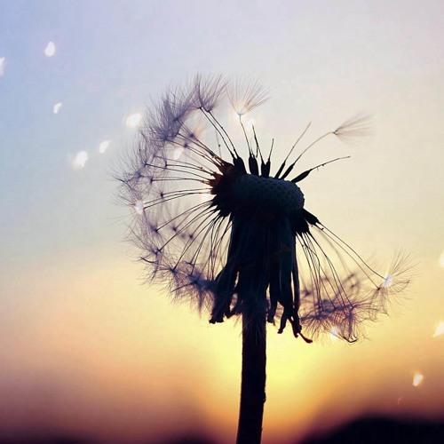 unueberlegt | Pusteblume