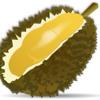 Mr os - durian dah berbunga