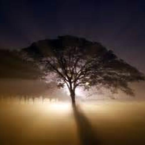 Wander fog