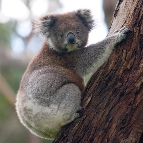 JD Jam - Marsupial Maneuvers