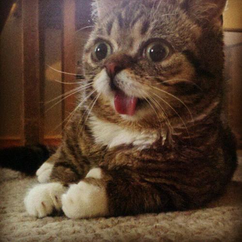 OSCill OM - Abstract Cats