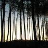 Francois & The Atlas Mountains – The Way To The Forest (Ibibio Sound Machine Remix)