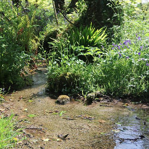A stream in Cornwall