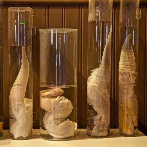 gigant penis museum København gratis