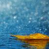 Relaxe com o fantástico som da chuva
