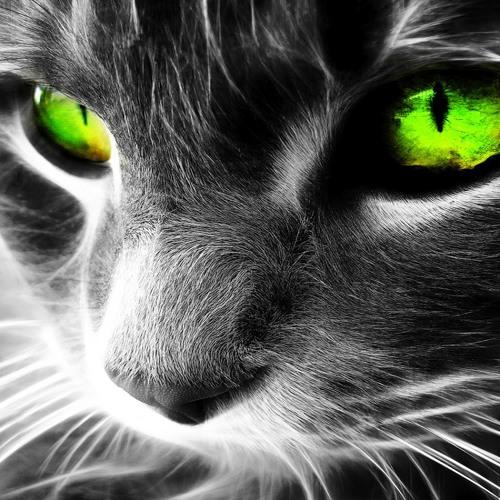 Olhos de Gato (with original lyrics)
