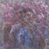 Alexander Van Pelt - Afternoon Delight - Pamtrees' Shadows