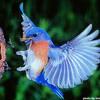 Yarah.Bravo (One.Self) - Bluebird(mr.Liongrip.birdfunk.remix)(STBB379)