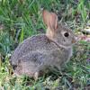 Hop Around Like A Bunny