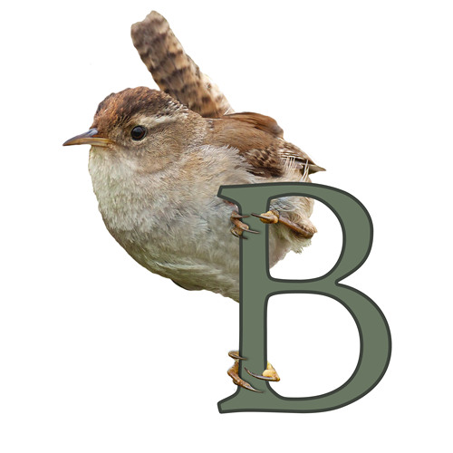BirdNote Theme Music