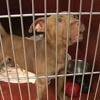 Save MKE's Court Case Dogs