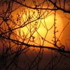 birch book-morning's waking dream
