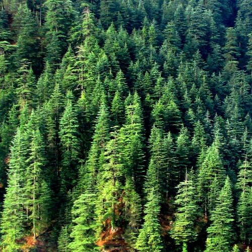 Deep Forest (Original Mix)