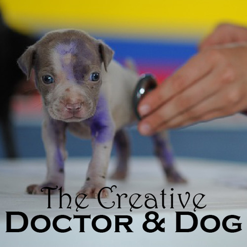 The Creative Doctor & Dog: Secrets of Highly Efficient Writers, Tip #1. Make writing a habit
