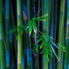 Download Bamboo Forest Mp3