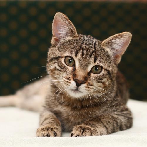 Darf man Katzen mit Spezialfutter vertreiben?
