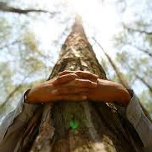 6-18-14 oddyoblog--first degree tree fondling