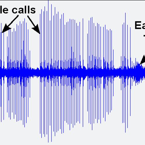 Fin Whale Calls In Seismic Data