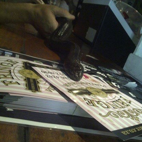 Rebel Gun |  Mixnblend Feat Sannie Fox