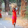 Forest dwellers unaware about the Forest Rights Act, land mafia take advantage