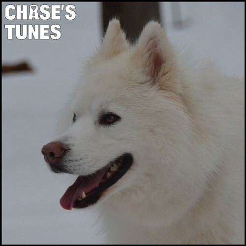 Chase's Tunes