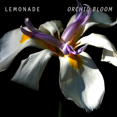 Lemonade - Orchid Bloom