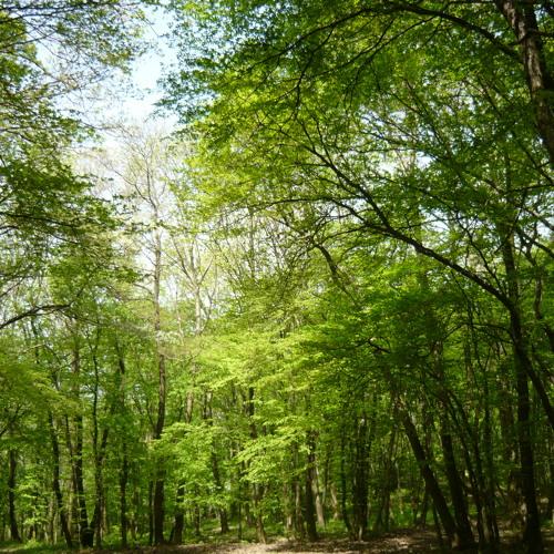 The Woods III. - The Sensual Coalescence of Viva Aqua