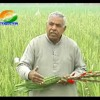 Government to bring in a 24 hour Television channel for farmers.