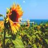 Plants (Original Mix)